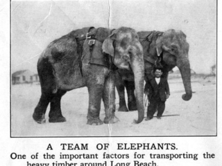 clipping: team of elephants for building boardwalk