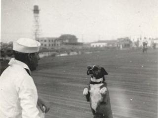 dog begging from sailor on boardwalk, WW2
